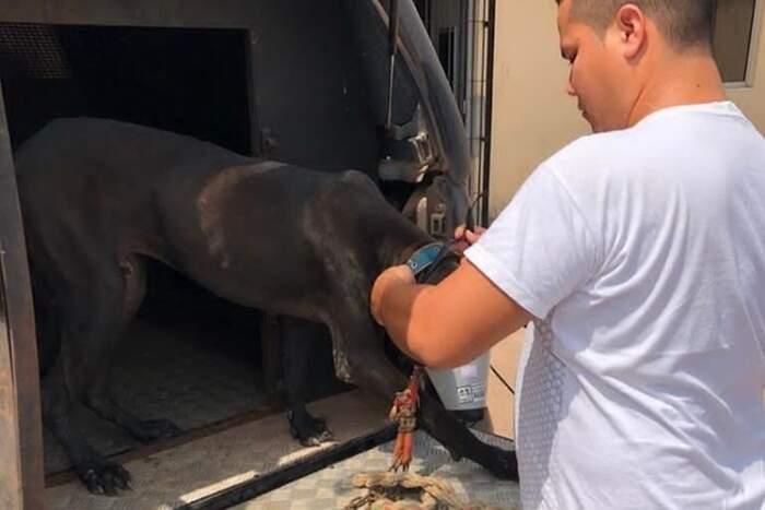 Os animais foram resgatados após a prisão em flagrante do acusado pelas agressões
