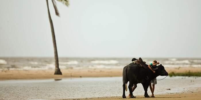 Localizada na foz do Rio Amazonas, a Praia do Pesqueiro é o grande destaque na Ilha do Marajó